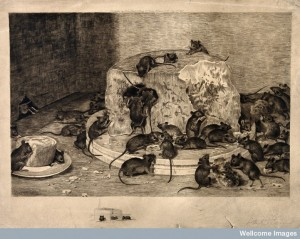 I doubt these mice felt the same nervousness about sin - Wellcome Library, London.