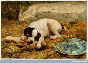 A puppy lying on a straw bed gnawing a bone. Credit: Wellcome Library, London.