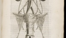 A depiction of the female reproductive system.