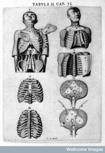 "L0007893 Torso and rib cage, Vesling ""Syntagma"", 1647 Credit: Wellcome Library, London. Wellcome Images images@wellcome.ac.uk http://wellcomeimages.org Human figure revealing torso and rib cage. Syntagma anatomicum Johannes Vesling Published: 1647 Copyrighted work available under Creative Commons Attribution only licence CC BY 4.0 http://creativecommons.org/licenses/by/4.0/"