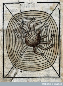 L0029216 A spider on its web, woodcut, 1547