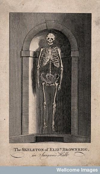 V0013496 The skeleton of Elizabeth Brownrigg, displayed in a niche at