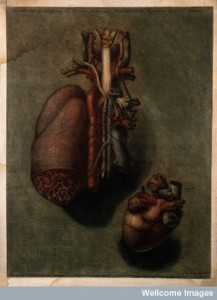 The heart: two dissections. Credit: Wellcome Library, London.