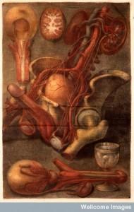 J.F. Gautier d'Agoty, Myologie complette en coleur... Credit: Wellcome Library, London.