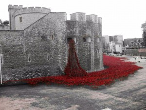 Poppies at the Tower of London. Image courtesy of Ciara Meehan