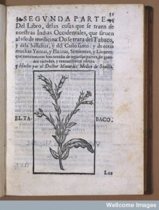 Illustrates and describes the uses of the tobacco plant in headache, asthma, obstructions, worm infestations and the treatment of wounds and ulcers (1580). Image courtesy of the Wellcome Library, London.
